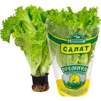 Салат Премиум горшочек