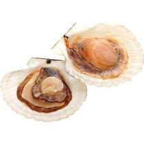 Морской гребешок на половинке раковины замороженный