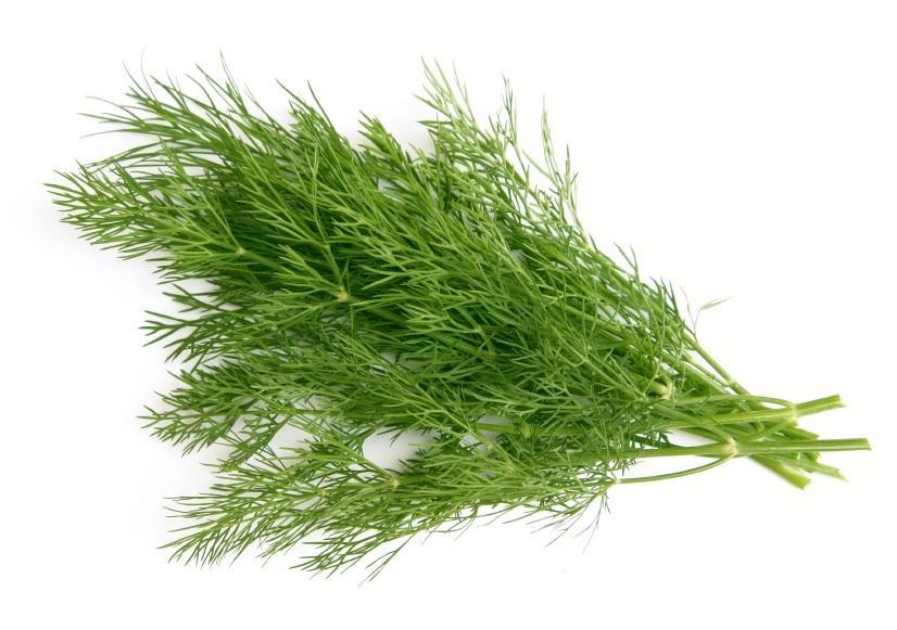 Укроп зелень