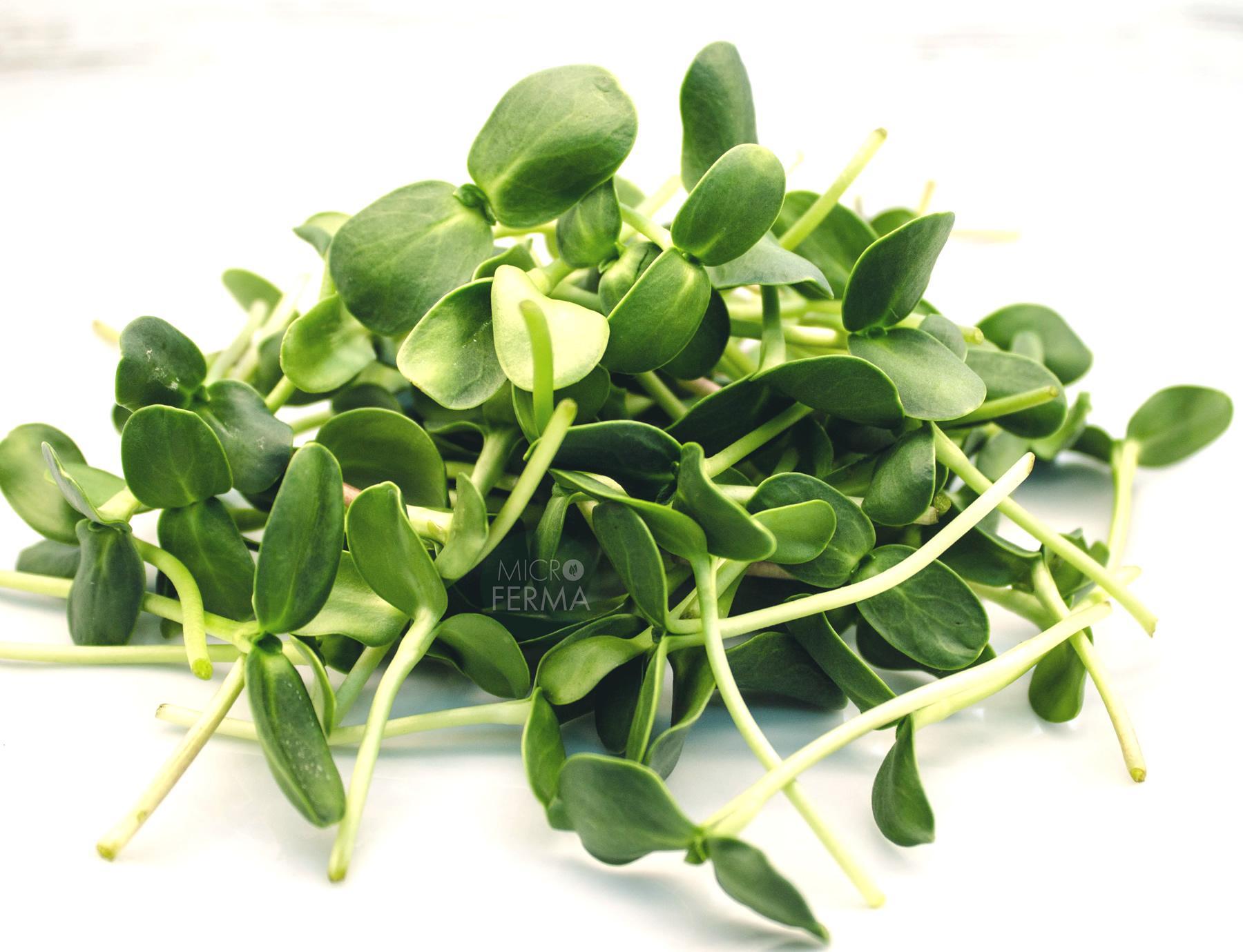 Микрозелень Подсолнечника Маманатура