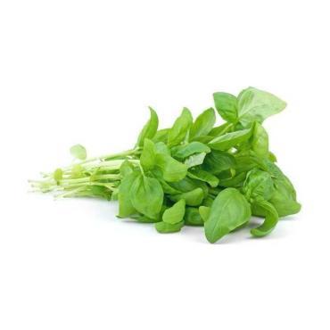 Базилик МВВ зеленый