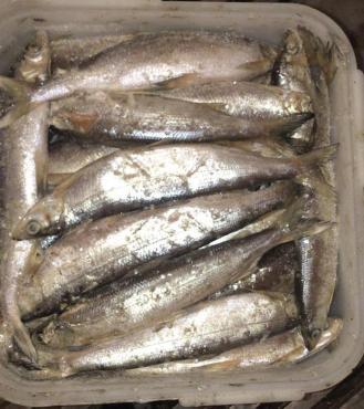 Ряпушка тушка с головой  с/м Якутия 25-30 см., весовой,Якутская рыба, 20 кг.