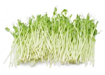 Микрозелень Гороха Маманатура