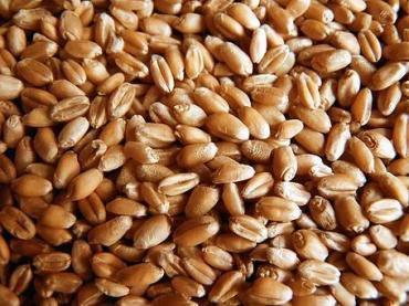 пшеница 5кг/уп